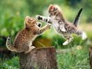 0.cats_98[1].jpg